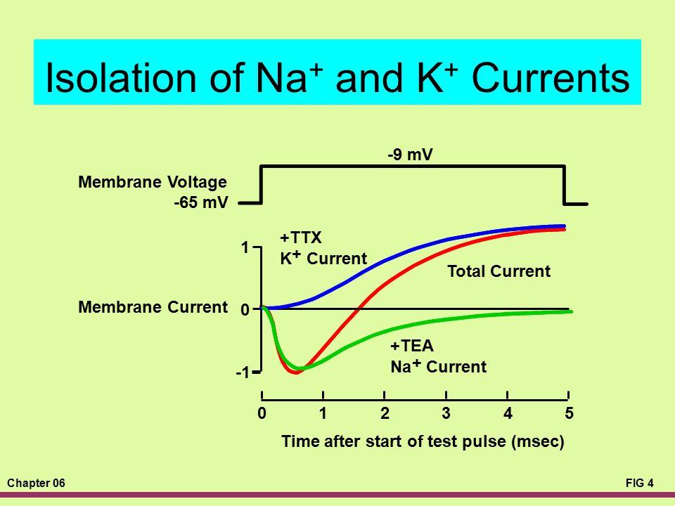 Chapter 06FIG 4 Isolation of Na + and K + Currents -9 mV -65 mV Time after start of test pulse (msec) 012345 1 0 +TTX K + Current Membrane Voltage Mem