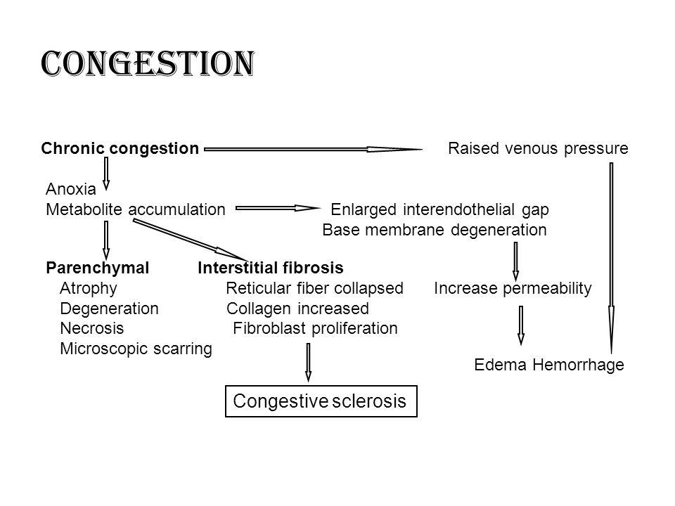 Chronic congestion Raised venous pressure Anoxia Metabolite accumulation Enlarged interendothelial gap Base membrane degeneration Parenchymal Intersti