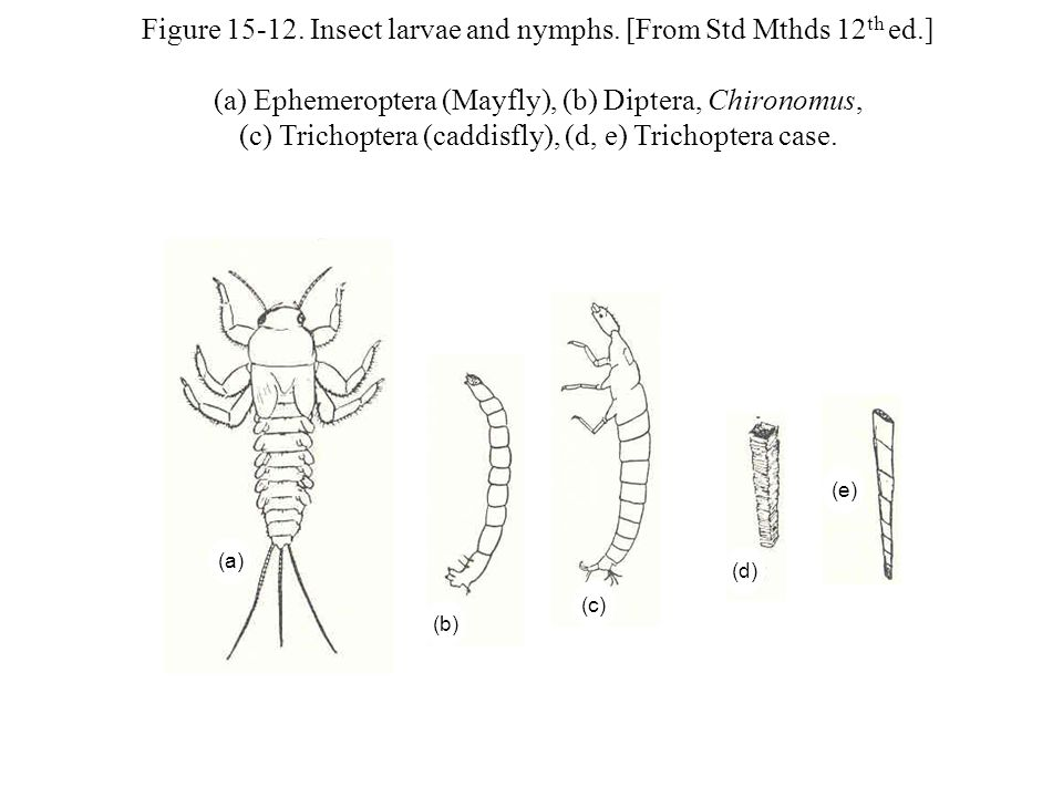 Figure 15-12. Insect larvae and nymphs.