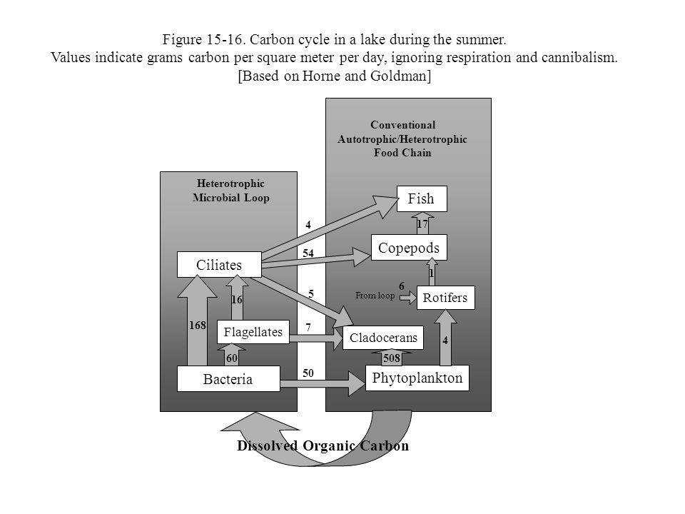 Figure 15-16. Carbon cycle in a lake during the summer.