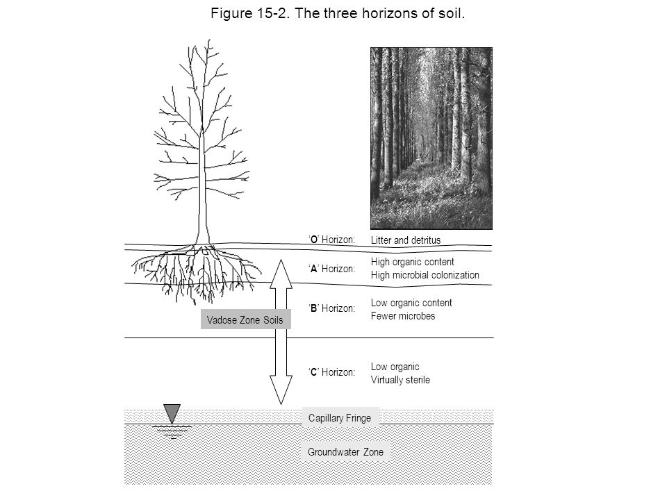 Figure 15-2. The three horizons of soil.