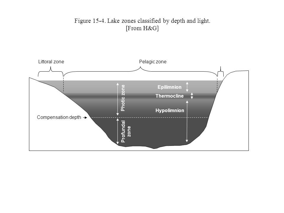 Figure 15-4. Lake zones classified by depth and light.