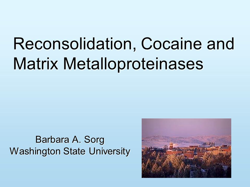 Reconsolidation, Cocaine and Matrix Metalloproteinases Barbara A. Sorg Washington State University