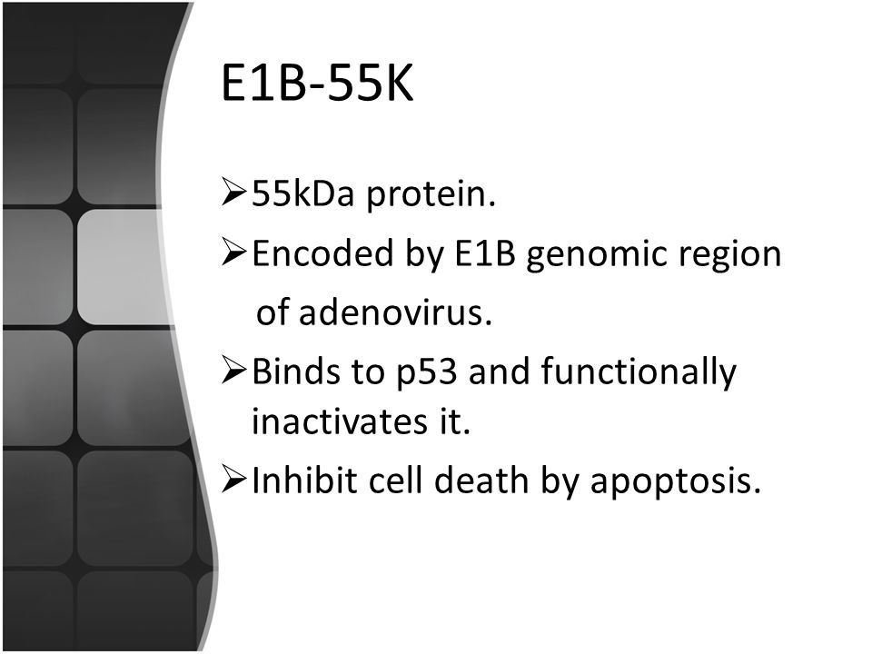 E1B-55K  55kDa protein. Encoded by E1B genomic region of adenovirus.