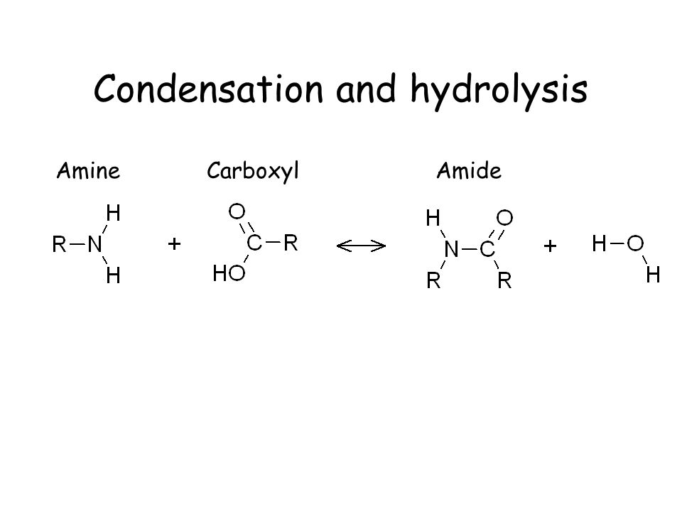 Condensation and hydrolysis AmineCarboxylAmide
