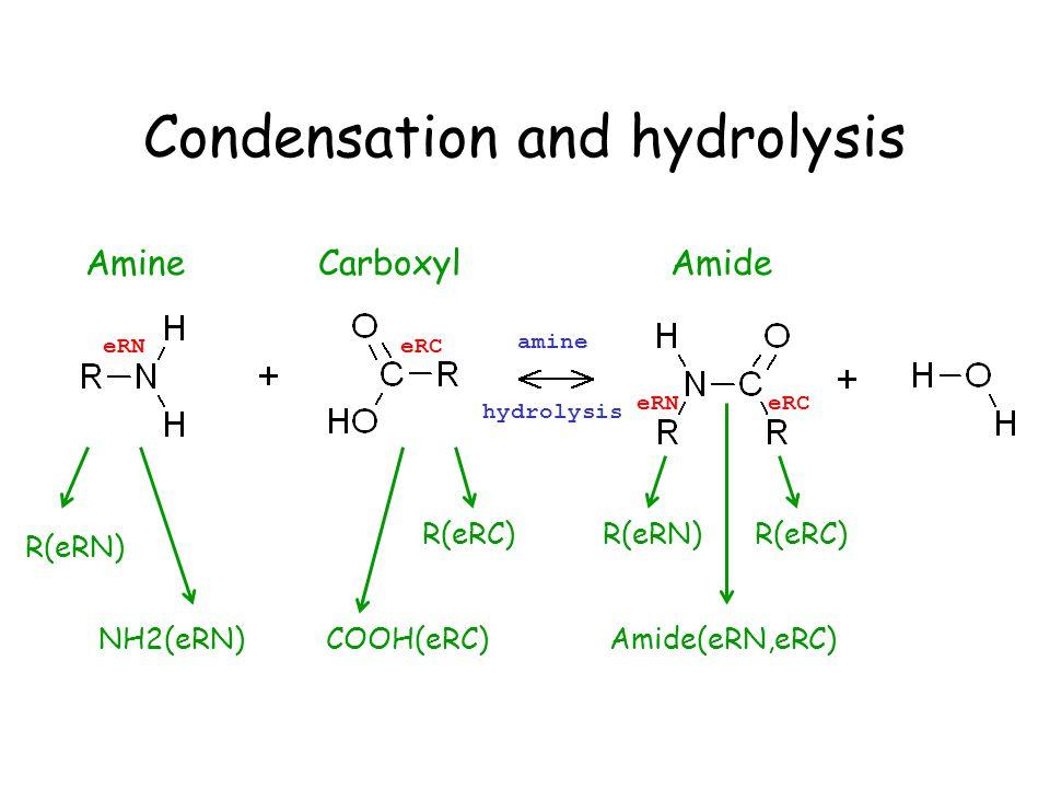 Condensation and hydrolysis AmineCarboxylAmide R(eRN) NH2(eRN)COOH(eRC) R(eRC) eRNeRC eRNeRC amine hydrolysis R(eRN)R(eRC) Amide(eRN,eRC)