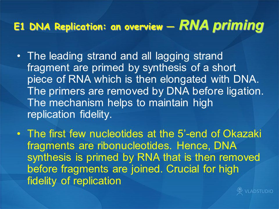 E1 DNA Replication: an overview — RNA priming The leading strand and all lagging strand fragment are primed by synthesis of a short piece of RNA which