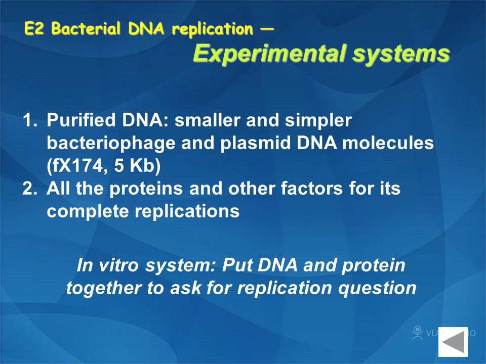E2 Bacterial DNA replication — Experimental systems 1.Purified DNA: smaller and simpler bacteriophage and plasmid DNA molecules (fX174, 5 Kb) 2.All th