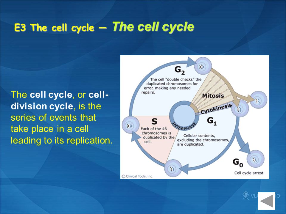 E3 The cell cycle — The cell cycle The cell cycle, or cell- division cycle, is the series of events that take place in a cell leading to its replicati