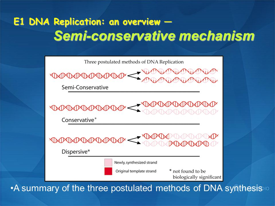 E4 Eukaryotic DNA replication — Experimental systems 1.Small animal viruses (simian virus 40.