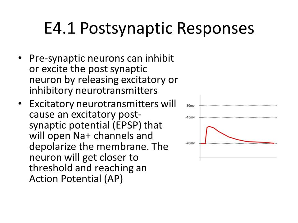 E4.1 Postsynaptic Responses Pre-synaptic neurons can inhibit or excite the post synaptic neuron by releasing excitatory or inhibitory neurotransmitters Excitatory neurotransmitters will cause an excitatory post- synaptic potential (EPSP) that will open Na+ channels and depolarize the membrane.