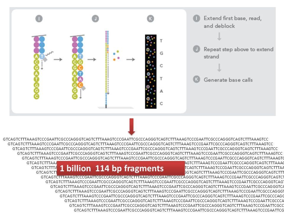 GTCAGTCTTTAAAGTCCCGAATTCGCCCAGGGTCAGTCTTTAAAGTCCCGAATTCGCCCAGGGTCAGTCTTTAAAGTCCCGAATTCGCCCAGGGTCAGTCTTTAAAGTCC 1 billion 114 bp fragments