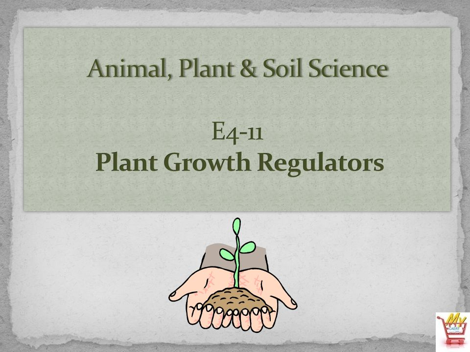 Several days before the introduction of this lesson prepare two identical plants for an interest approach.