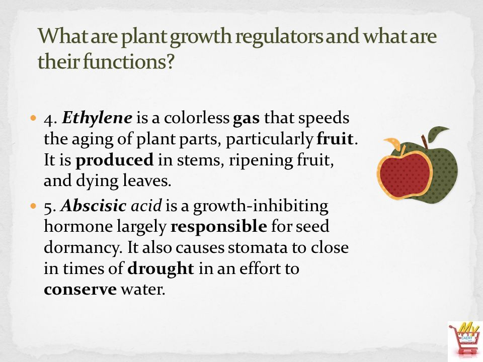 4. Ethylene is a colorless gas that speeds the aging of plant parts, particularly fruit. It is produced in stems, ripening fruit, and dying leaves. 5.