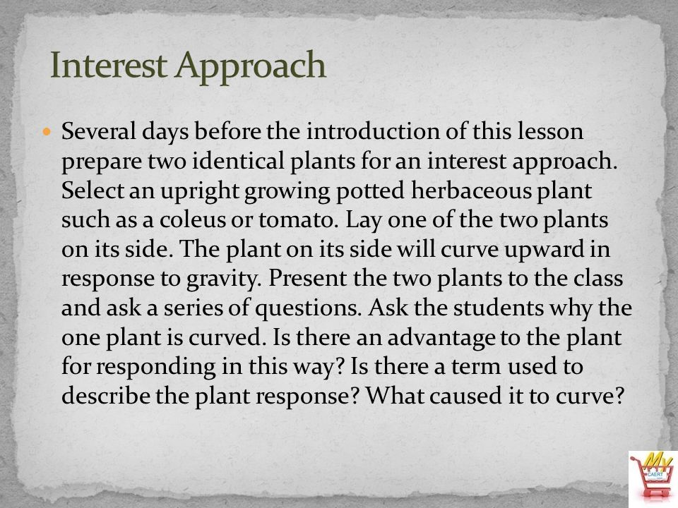 Several days before the introduction of this lesson prepare two identical plants for an interest approach. Select an upright growing potted herbaceous