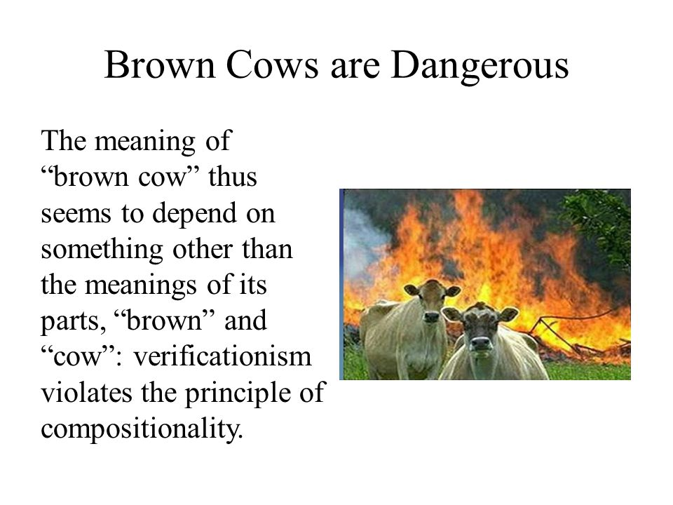Brown Cows are Dangerous The meaning of brown cow thus seems to depend on something other than the meanings of its parts, brown and cow : verificationism violates the principle of compositionality.
