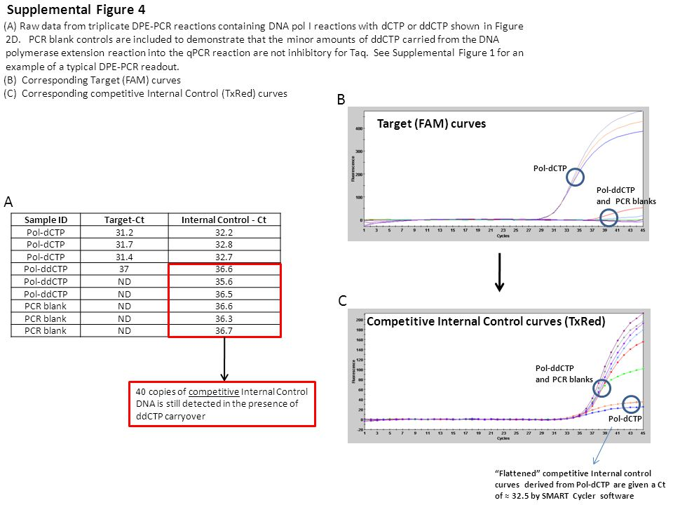 (A) Raw data from triplicate DPE-PCR reactions containing DNA pol I reactions with dCTP or ddCTP shown in Figure 2D.