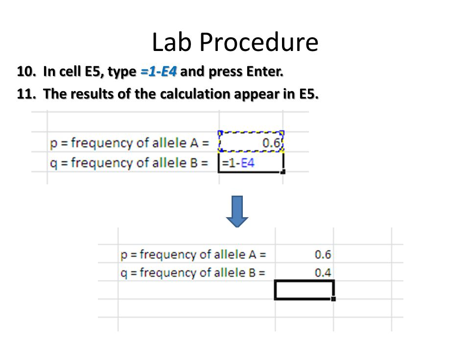 Lab Procedure 10.In cell E5, type =1-E4 and press Enter.