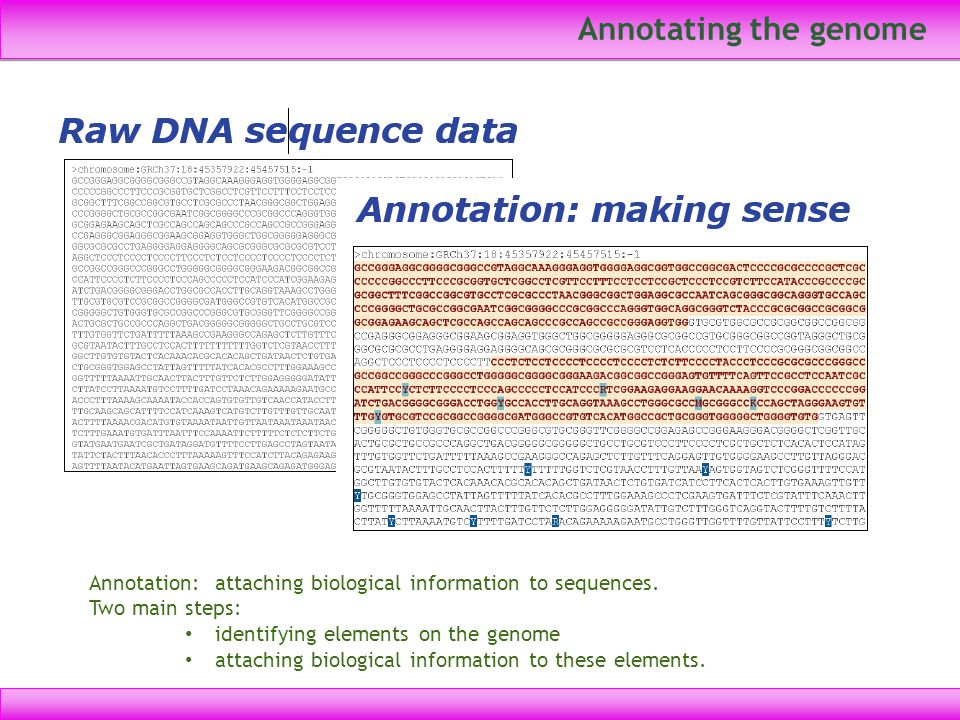 Annotating the genome Annotation: attaching biological information to sequences. Two main steps: identifying elements on the genome attaching biologic