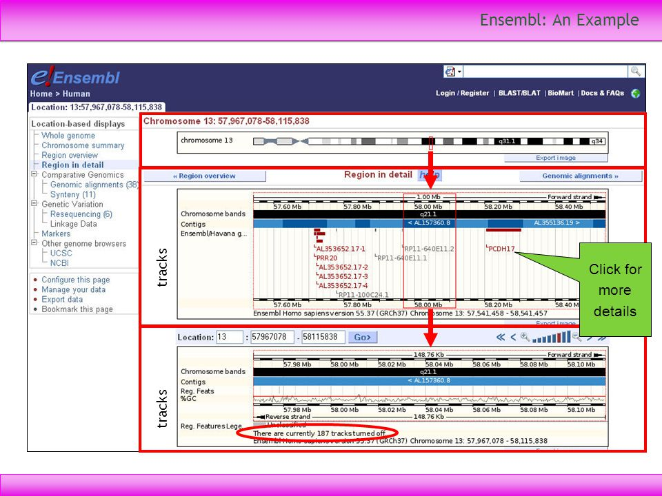 Ensembl: An Example Click for more details tracks