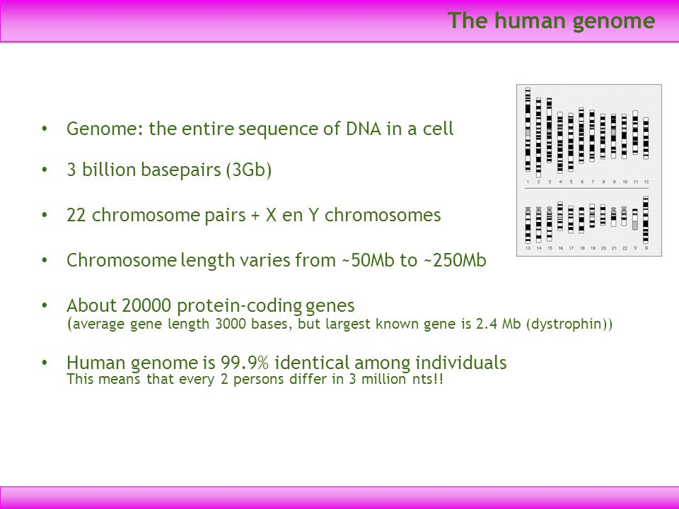 The human genome Genome: the entire sequence of DNA in a cell 3 billion basepairs (3Gb) 22 chromosome pairs + X en Y chromosomes Chromosome length var