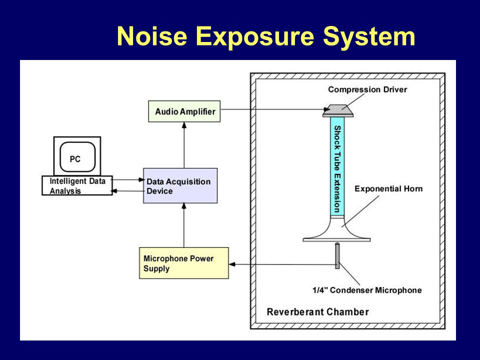 Noise Exposure System