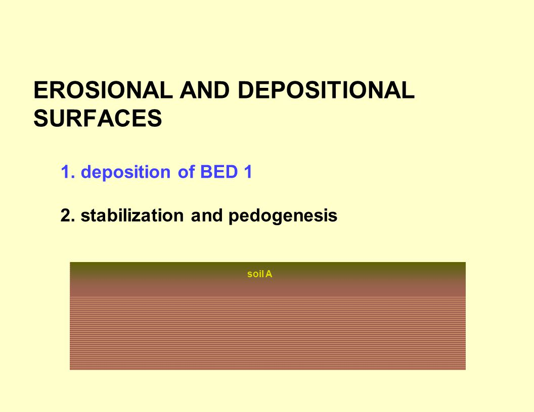EROSIONAL AND DEPOSITIONAL SURFACES 1. deposition of BED 1 2. stabilization and pedogenesis soil A
