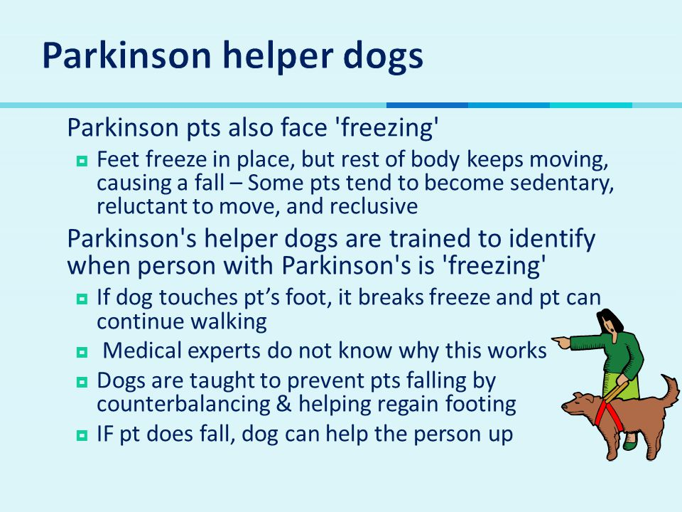  Parkinson pts also face freezing  Feet freeze in place, but rest of body keeps moving, causing a fall – Some pts tend to become sedentary, reluctant to move, and reclusive  Parkinson s helper dogs are trained to identify when person with Parkinson s is freezing  If dog touches pt's foot, it breaks freeze and pt can continue walking  Medical experts do not know why this works  Dogs are taught to prevent pts falling by counterbalancing & helping regain footing  IF pt does fall, dog can help the person up