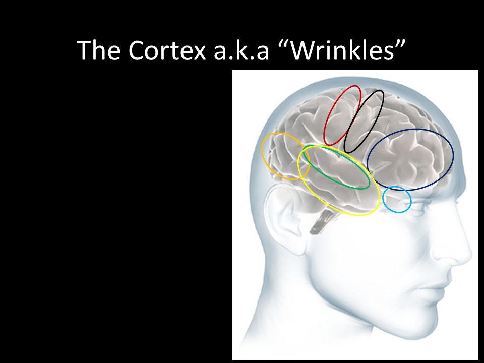 "The Cortex a.k.a ""Wrinkles"""