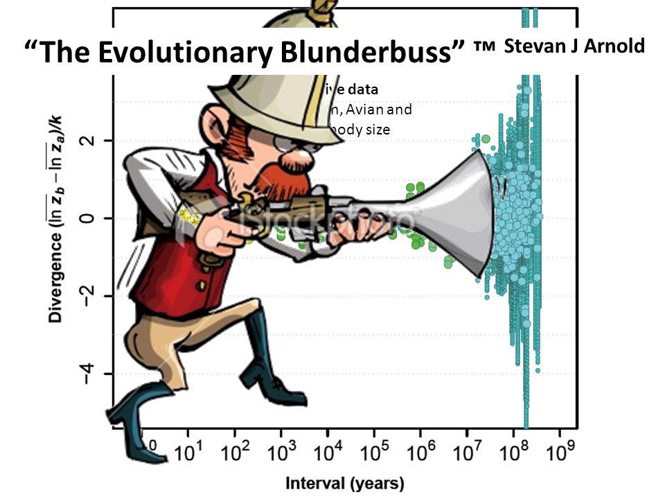 "Comparative data Mammalian, Avian and Squamate body size ""The Evolutionary Blunderbuss"" ™ Stevan J Arnold"