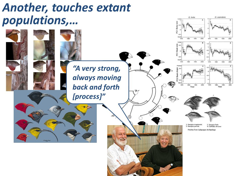 """Another, touches extant populations,… """"A very strong, always moving back and forth [process]"""""""