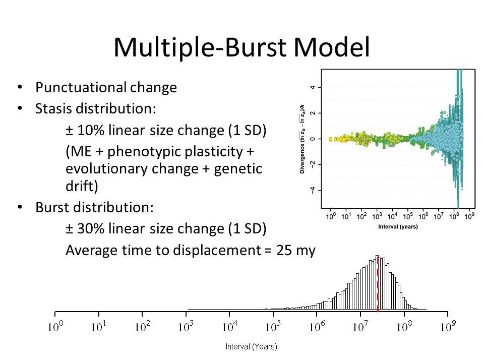 Multiple-Burst Model Punctuational change Stasis distribution: ± 10% linear size change (1 SD) (ME + phenotypic plasticity + evolutionary change + gen
