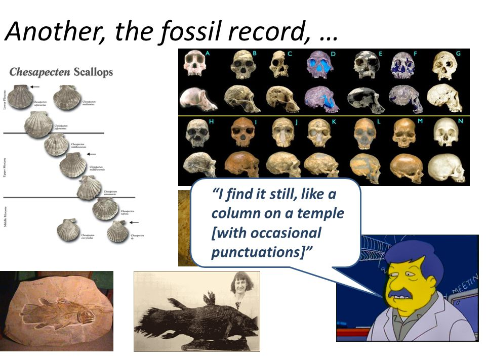 """Another, the fossil record, … """"I find it still, like a column on a temple [with occasional punctuations]"""""""