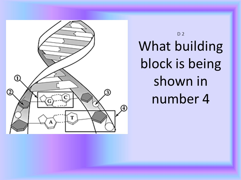 D 2 What building block is being shown in number 4