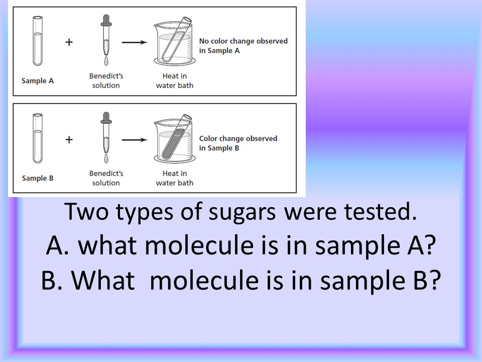 D 4 Two types of sugars were tested. A. what molecule is in sample A.