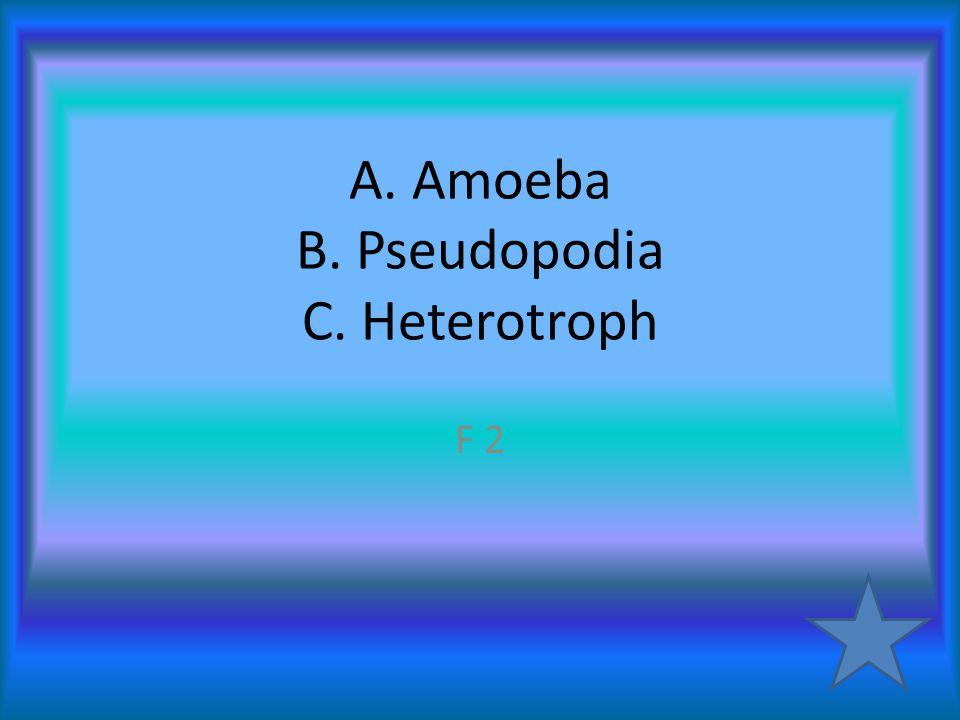 A. Amoeba B. Pseudopodia C. Heterotroph F 2