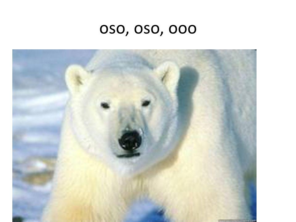 oso, oso, ooo