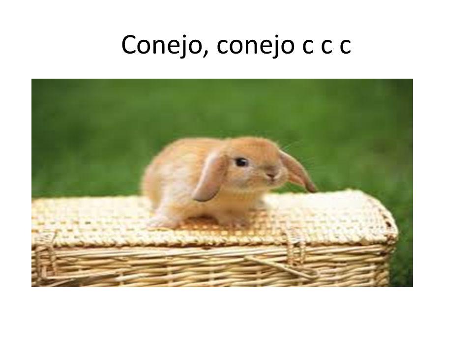 Conejo, conejo c c c