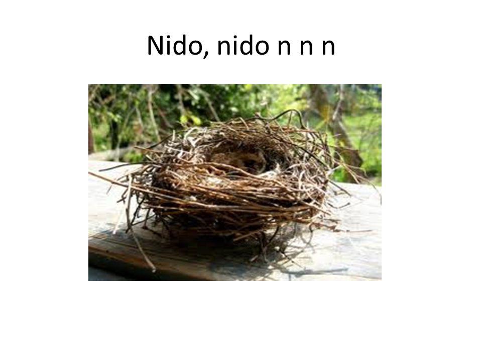 Nido, nido n n n