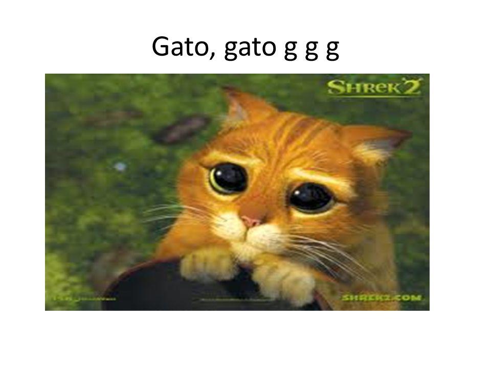 Gato, gato g g g