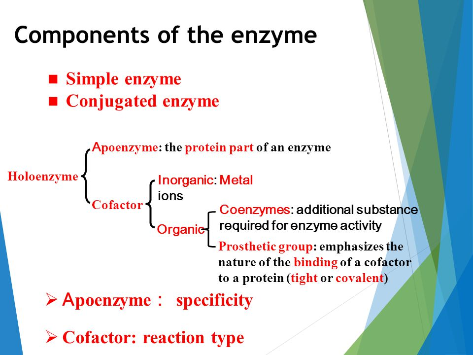 Components of the enzyme A poenzyme: the protein part of an enzyme Cofactor Inorganic: Metal ions Organic Holoenzyme Simple enzyme Conjugated enzyme Prosthetic group: emphasizes the nature of the binding of a cofactor to a protein (tight or covalent) Coenzymes: additional substance required for enzyme activity  A poenzyme : specificity  Cofactor: reaction type