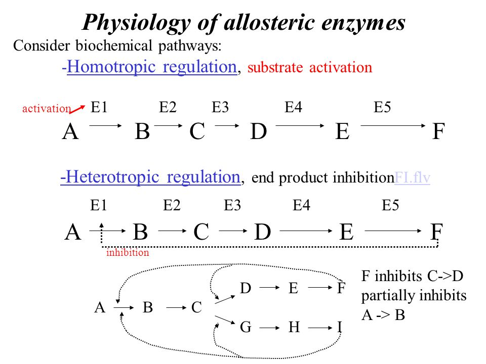 Physiology of allosteric enzymes Consider biochemical pathways: - Homotropic regulation, substrate activation activation E1E2 E3 E4 E5 A B C D E F -Heterotropic regulation, end product inhibitionFI.flvFI.flv E1 E2 E3 E4E5 A B C D E F inhibition DEFABCGHIDEFABCGHI F inhibits C->D partially inhibits A -> B