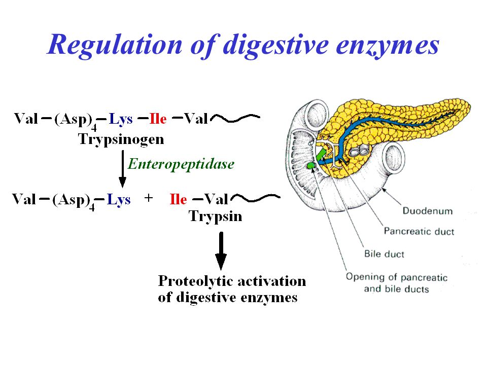 Regulation of digestive enzymes