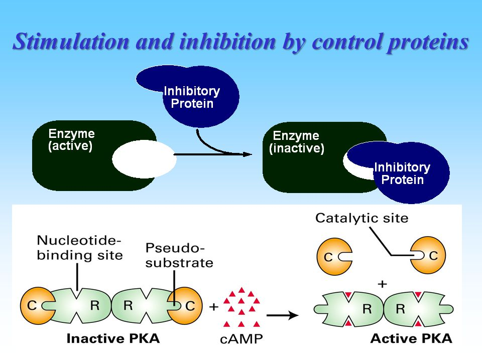 Stimulation and inhibition by control proteins