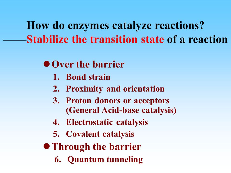 How do enzymes catalyze reactions.