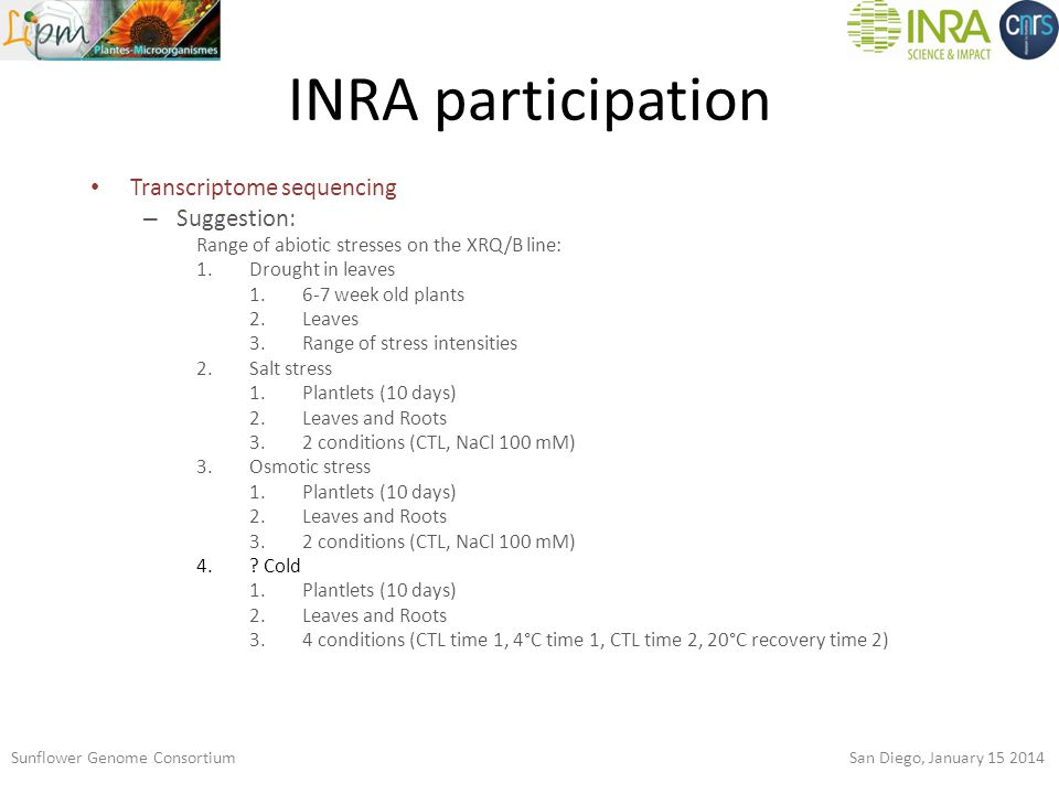 INRA participation Sunflower Genome Consortium San Diego, January 15 2014 Transcriptome sequencing – Suggestion: Range of abiotic stresses on the XRQ/B line: 1.Drought in leaves 1.6-7 week old plants 2.Leaves 3.Range of stress intensities 2.Salt stress 1.Plantlets (10 days) 2.Leaves and Roots 3.2 conditions (CTL, NaCl 100 mM) 3.Osmotic stress 1.Plantlets (10 days) 2.Leaves and Roots 3.2 conditions (CTL, NaCl 100 mM) 4..