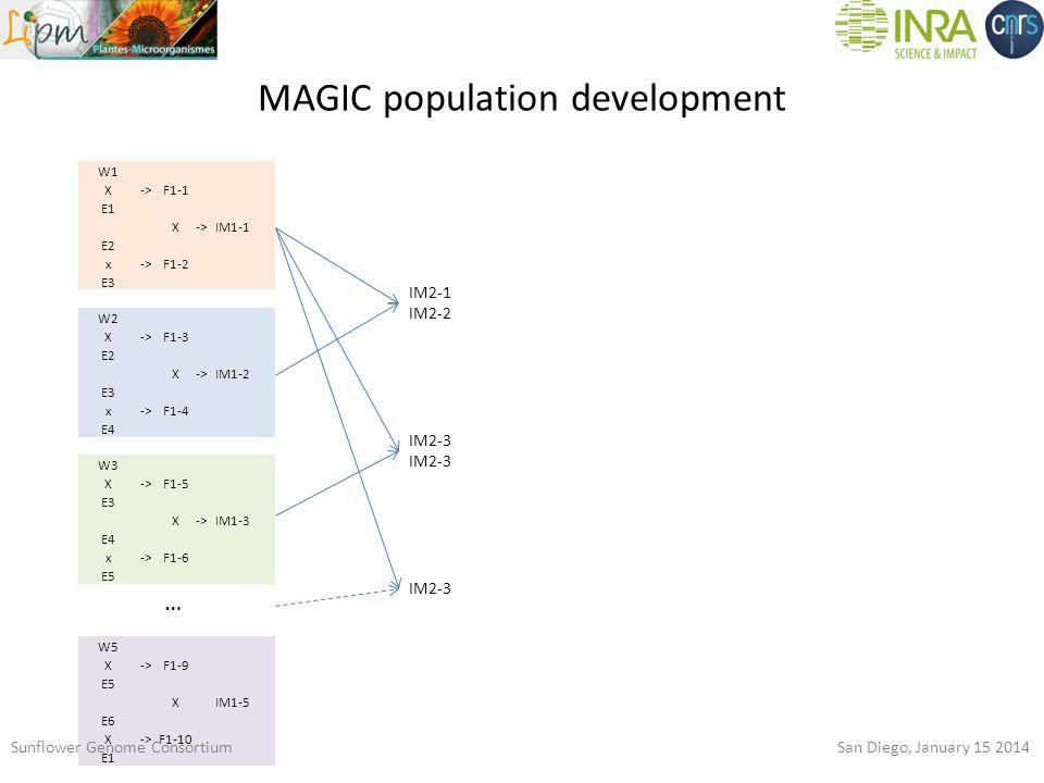 MAGIC population development W1 X->F1-1 E1 X->IM1-1 E2 x->F1-2 E3 W2 X->F1-3 E2 X->IM1-2 E3 x->F1-4 E4 W3 X->F1-5 E3 X->IM1-3 E4 x->F1-6 E5 W5 X->F1-9 E5 X IM1-5 E6 X->F1-10 E1 … IM2-1 IM2-2 IM2-3 Sunflower Genome Consortium San Diego, January 15 2014