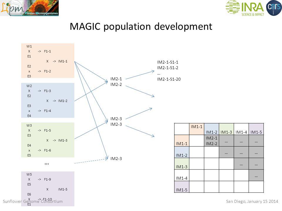 MAGIC population development W1 X->F1-1 E1 X->IM1-1 E2 x->F1-2 E3 W2 X->F1-3 E2 X->IM1-2 E3 x->F1-4 E4 W3 X->F1-5 E3 X->IM1-3 E4 x->F1-6 E5 W5 X->F1-9 E5 X IM1-5 E6 X->F1-10 E1 … IM2-1 IM2-2 IM2-3 IM2-1-S1-1 IM2-1-S1-2 … IM2-1-S1-20 IM1-1 IM1-2IM1-3IM1-4IM1-5 IM1-1 IM2-1 IM2-2 ……… IM1-2 ……… IM1-3 …… IM1-4 … IM1-5 Sunflower Genome Consortium San Diego, January 15 2014