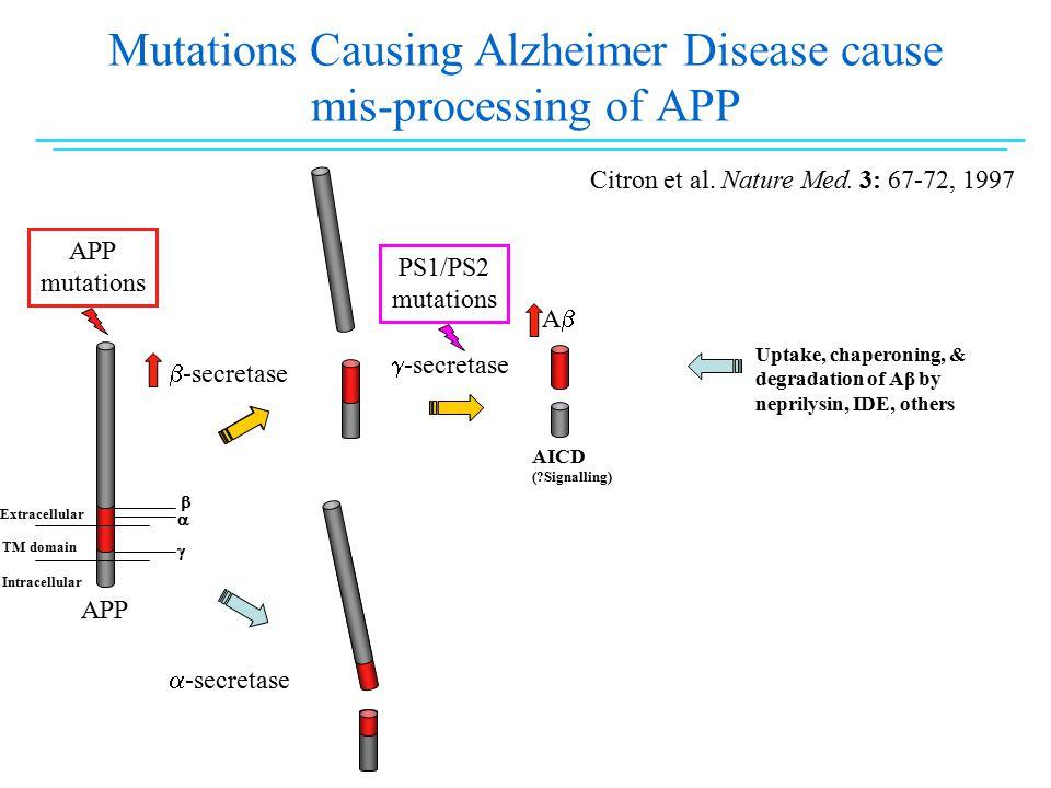 Mutations Causing Alzheimer Disease cause mis-processing of APP  -secretase  -secretase AA AICD ( Signalling)  -secretase Extracellular TM domain Intracellular APP mutations APP    Citron et al.