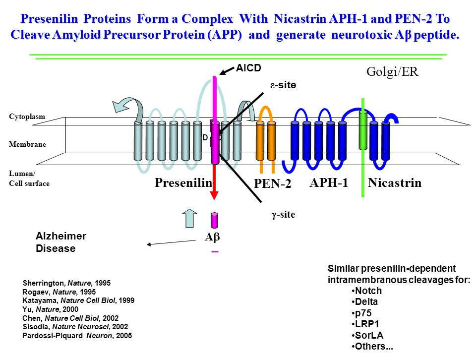 APH-1 Nicastrin PEN-2 Cytoplasm Lumen/ Cell surface Membrane Presenilin Proteins Form a Complex With Nicastrin APH-1 and PEN-2 To Cleave Amyloid Precursor Protein (APP) and generate neurotoxic Aβ peptide.